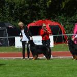 I Danmark. Championklass
