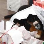 Plura på första julafton