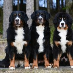 Mormor-Lhine , Mamma-Humlan & Plura