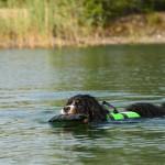 Plura 11 mån älskar att simma