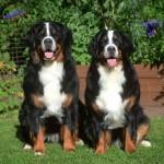Balder & Emma 2 år